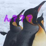 旭山動物園のペンギンが上を見ている