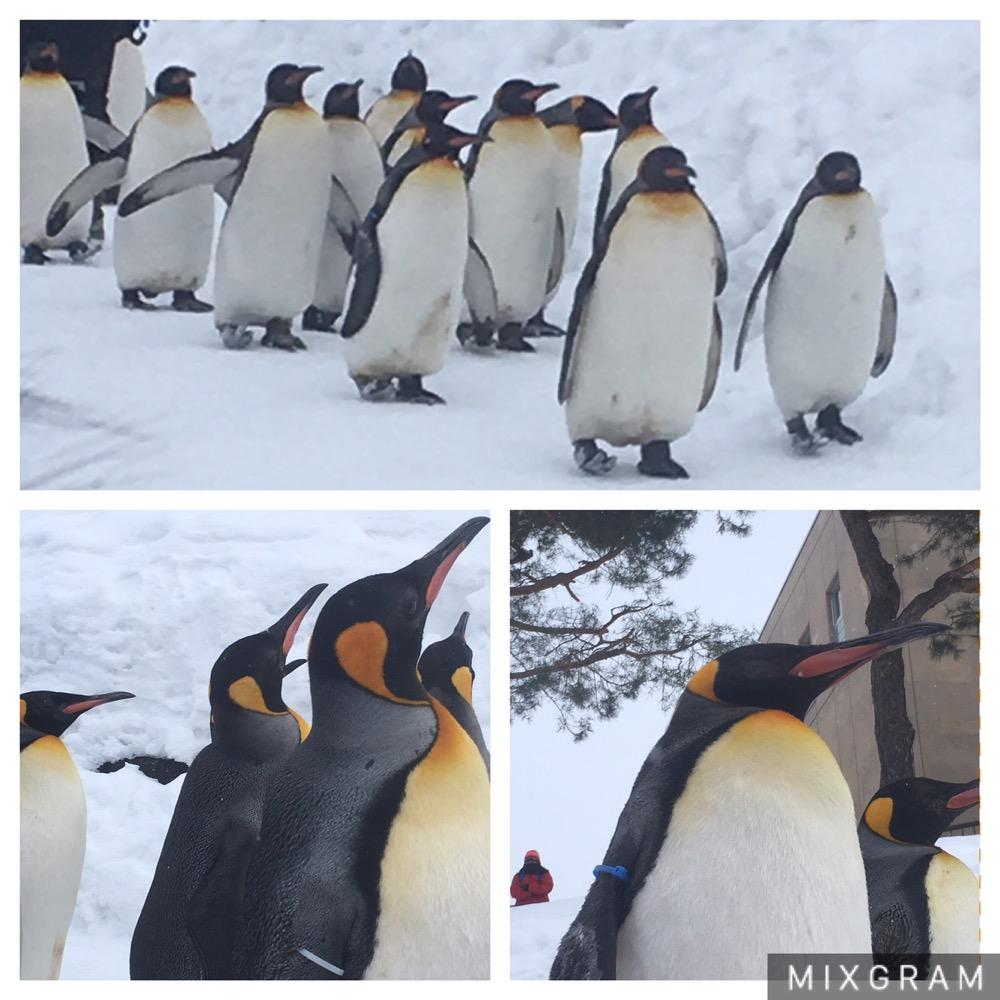 ペンギン3画像