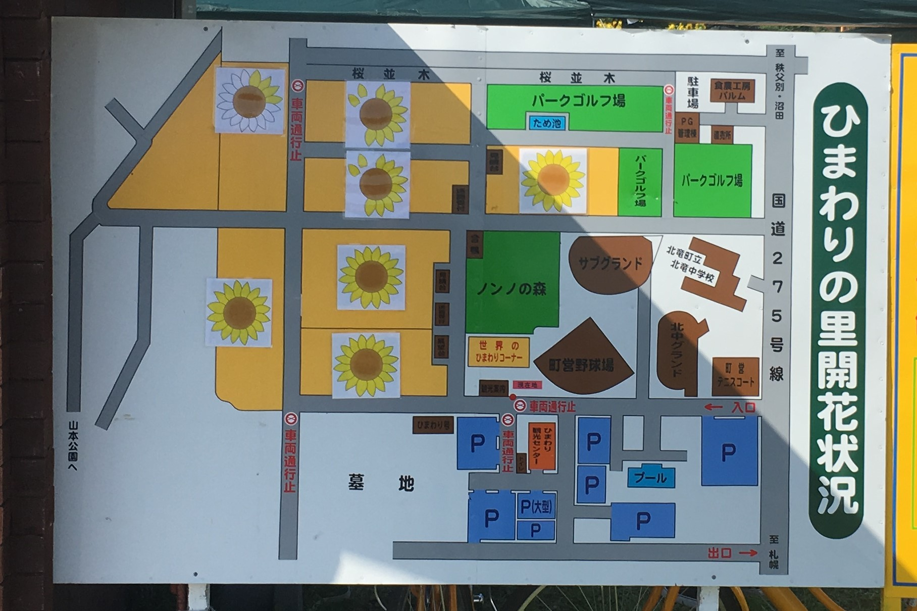 北竜町ひまわりの里のひまわりの開花状況の地図