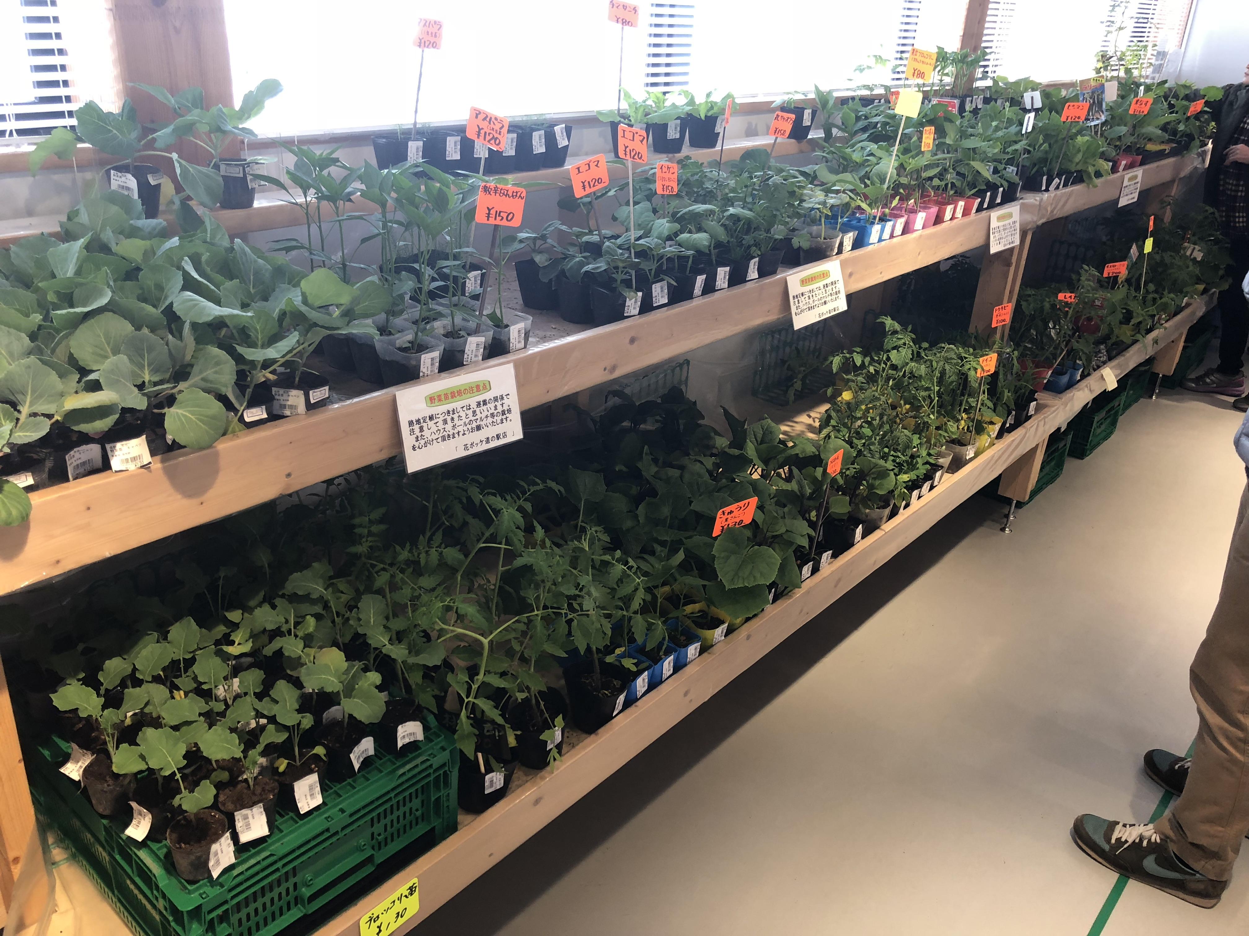 野菜の苗コーナー