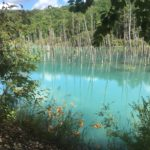 北海道美瑛町//青い池の写真館