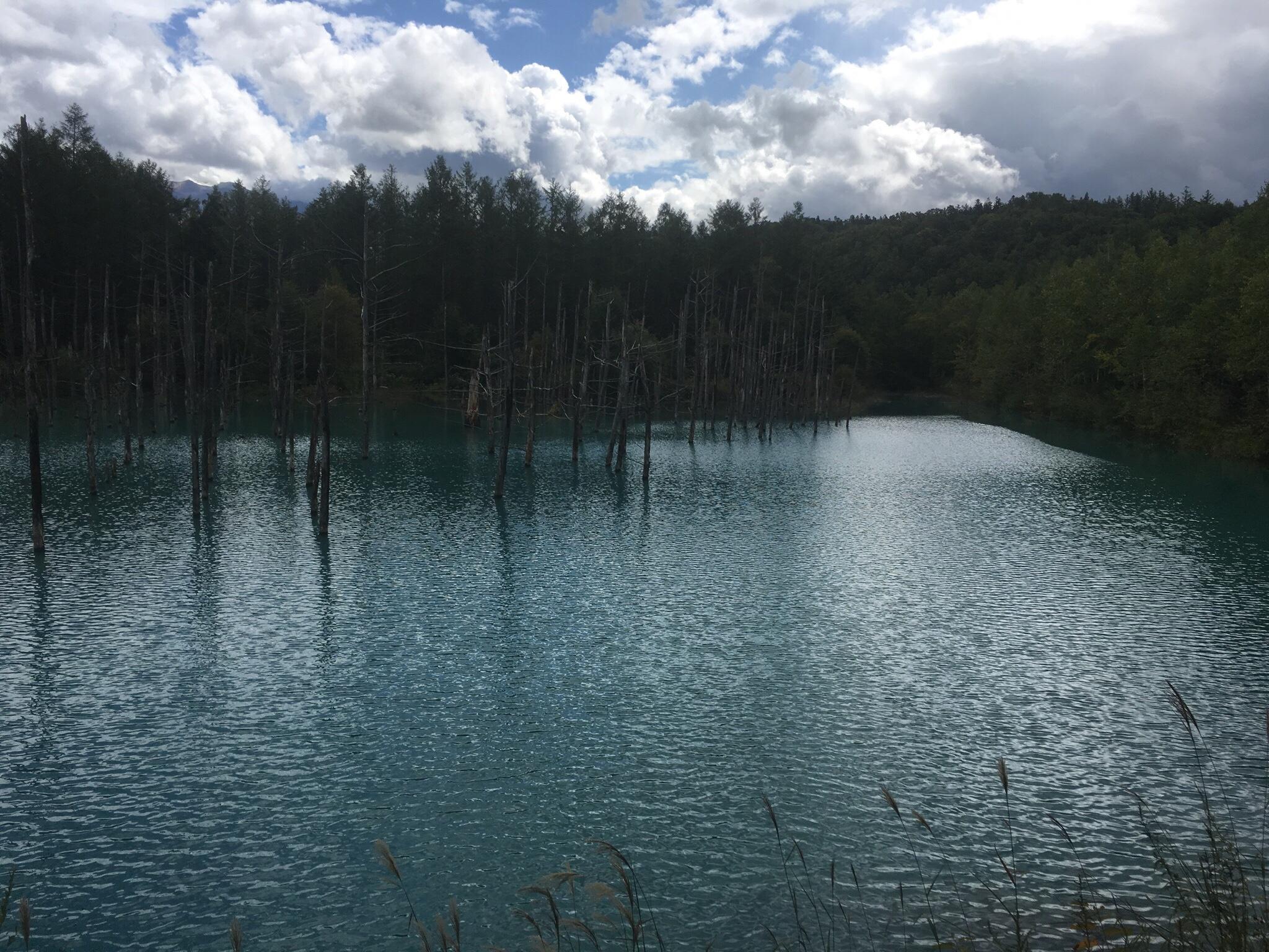 青い池の風に叩かれ、曇り空バージョン