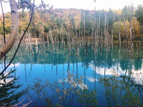 美瑛の青い池 晴れた日