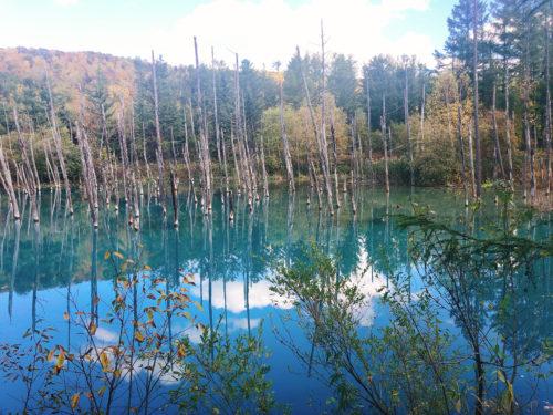 美瑛の青々とした青い池