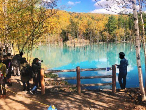 美瑛の青々とした青い池を撮影する人たち