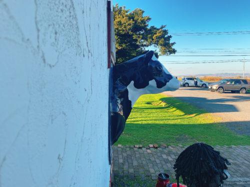 壁から牛が首を出している